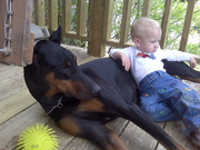 The Ultimate Doberman Puppy!!!